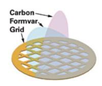Griglie TEM con un film di Formvar puro ricoperte da un leggero film di carbonio. Disponibili da 75 a 400 mesh. Square Mesh e Slotted. Diponibili in rame (Cu), nickel (Ni), oro (Au)