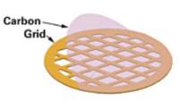 Griglie TEM con un film di carbon da 15-25 nm non contaminato da Formvar. Disponibili in rame (Cu), nickel (Ni) e oro (Au) da 200, 300 e 400 mesh; in molibdeno (Mo) 200 mesh (Hex.), alluminio (Al) e titanio (Ti) 400 mesh.